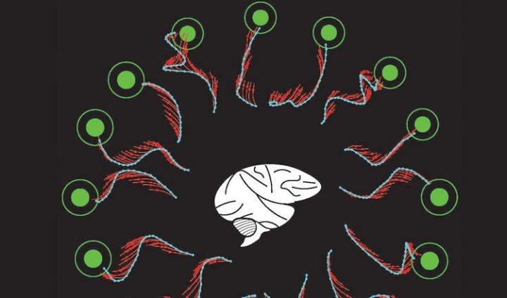 brain-mistakes