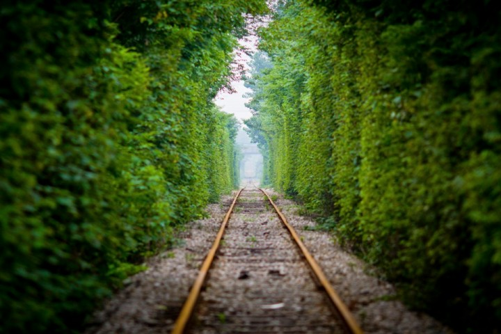 A resident walks along a railway track surrounded by trees on both sides, in Nanjing, Jiangsu province June 15, 2014. Picture taken June 15, 2014. REUTERS/Stringer (CHINA - Tags: TRANSPORT SOCIETY ENVIRONMENT TPX IMAGES OF THE DAY) CHINA OUT. NO COMMERCIAL OR EDITORIAL SALES IN CHINA - RTR3UMEI